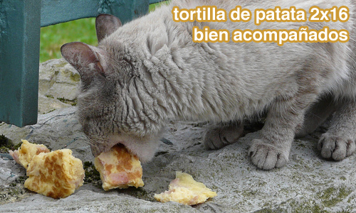 tortilla2x16
